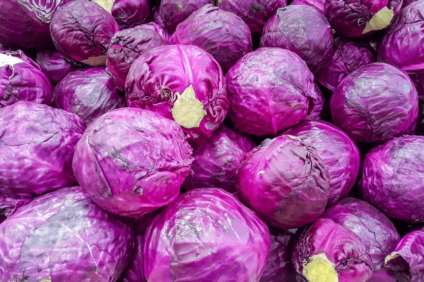 Cabbage Water Content