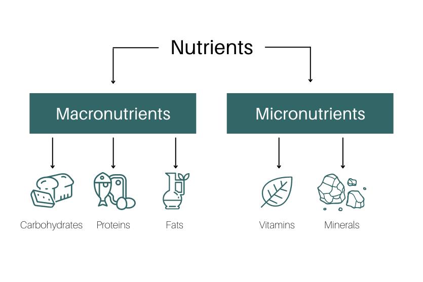 Macronutrients vs. Micronutrients Examples